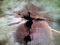 Treestump-closeup
