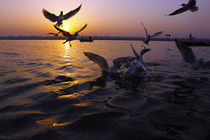 Flight of Delight-4, Varanasi, India von Soumen Nath