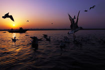 Flight of Delight-2, Varanasi, India by Soumen Nath