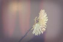 Flower by Alison Harper