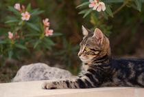 Katzenmalle-04818