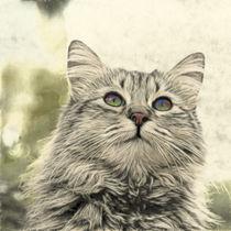 Mit leuchtenden Augen...Porträt einer Katze von pahit