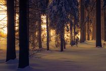 Winterwald von Robby Bachorz