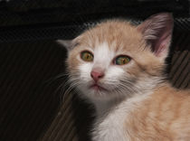 Katze-rot-2-5914
