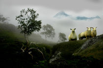 Cuorious sheep in a foggy landscape von Stein Liland