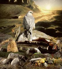 Falcon's Eye by Yvonne Pfeifer