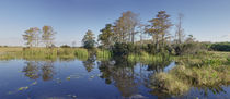 Loxahatchee National Wildlife Refuge by Robert Oelman