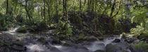 Inside the Murapal Rain Forest