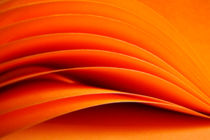 orange by filipo-photography