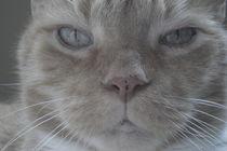 Purfect Cat by Ashley Spradlin