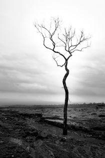 Sole Survivor by Teguh Budiman