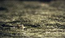 Hypno-Toad von Simon Bell