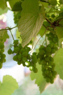 clusters of grapes von Altug TEZER