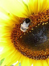 Sonnenblume mit Biene von Beatrice Mock