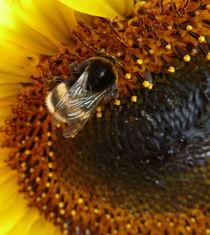 Biene von Beatrice Mock