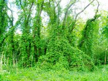 Grüne Landschaft von Wolfgang Wende