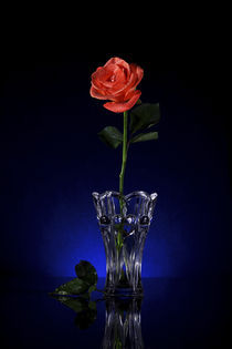 Rose, Greeting card on Blue back ground by Soumen Nath