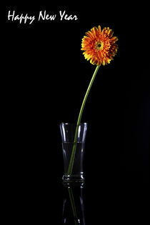 Happy New Year, Greeting Card, Gerbera by Soumen Nath