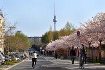 Dsc-0071-spring-mauerpark