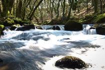 Golitha Falls von 1234