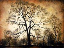 Late Autumn / Spätherbst by Apostolescu  Sorin