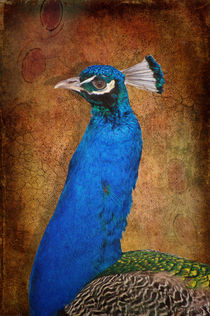 Pfau von AD DESIGN Photo + PhotoArt