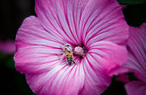 Working Bee by Dennis Lemmers
