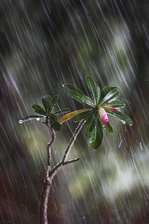 Rain, Plant, Monsoon by Soumen Nath