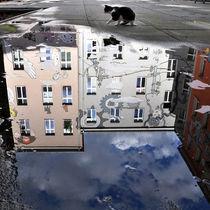Katze im Berliner Hinterhof von captainsilva