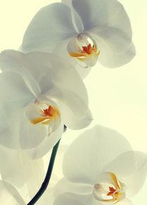 Orchideen-kunst