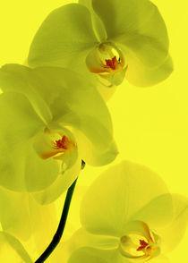 Orchideen-kunst-2