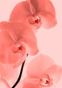 Orchideen-kunst-3