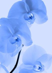 Orchideen Kunst Blau by Falko Follert