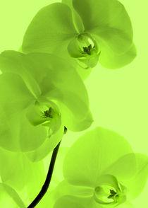 Orchideen Kunst Grün by Falko Follert