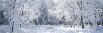 Winter, Forest, Yosemite National Park, California, USA by Panoramic Images