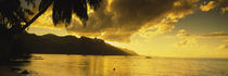 Silhouette Of Palm Trees At Dusk, Cooks Bay, Moorea, French Polynesia by Panoramic Images