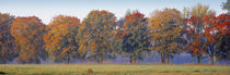 Trees in a garden, South Bohemia, Czech Republic by Panoramic Images