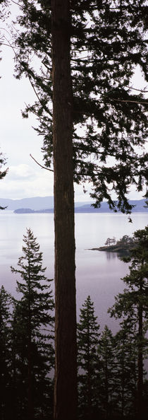 Chuckanut Bay, Skagit County, Washington State, USA von Panoramic Images