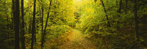 Dirt road passing through a forest, Vermont, USA by Panoramic Images