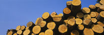 Stack of wooden logs in a timber industry, Austria von Panoramic Images