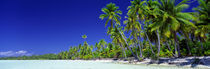 Beach With Palm Trees, Bora Bora, Tahiti by Panoramic Images