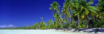 Panorama Print - Strand mit Palmen, Bora Bora, Tahiti von Panoramic Images