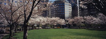 Trees in a park, Central Park, Manhattan, New York City, New York State, USA by Panoramic Images