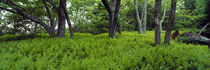 Trees in a forest, North Carolina, USA by Panoramic Images