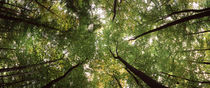 Low angle view of trees, Bavaria, Germany von Panoramic Images