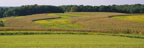 Field Of Corn Crops, Baltimore, Maryland, USA by Panoramic Images