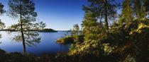 Trees at the lakeside, Lake Saimaa, Puumala, Finland by Panoramic Images