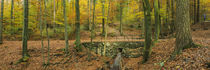 Beach trees in the forest, Canton Of Zurich, Switzerland by Panoramic Images