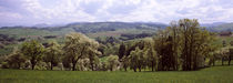 Pear trees in an orchard, Mostviertel, Lower Austria, Austria by Panoramic Images