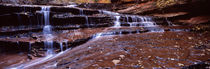 Stream flowing through rocks, North Creek, Zion National Park, Utah, USA by Panoramic Images